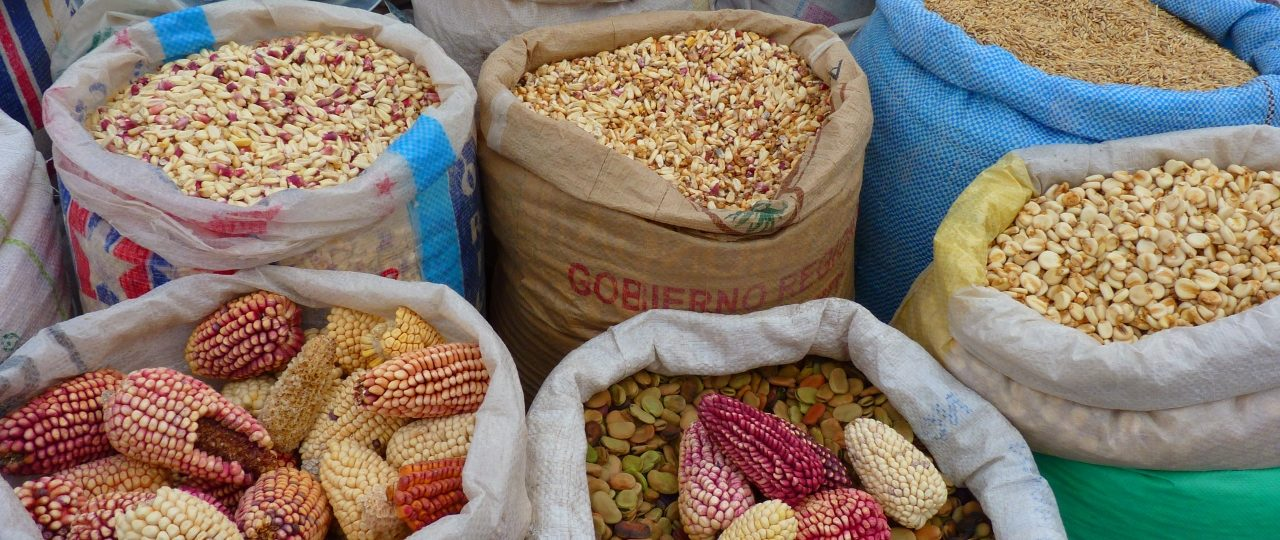 corn_maize_varieties_peru (1280x960)